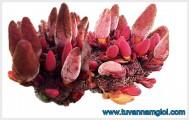 [TPHCM] Công dụng của nấm ngọc cẩu với sức khỏe sinh lý nam